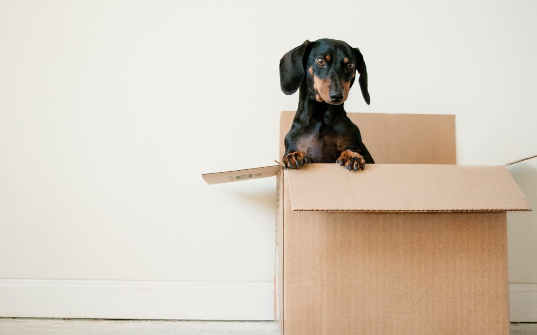 One Day P.A - YOUR MOVING HOME CHECKLIST!